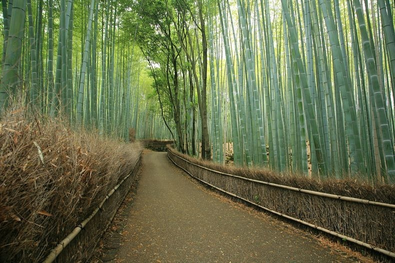 Sagano bamboo forest near Kyoto. Photo credit: Donna & Stephen on Flickr.