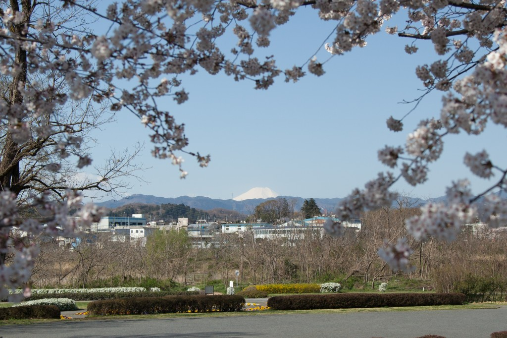 Seeing Mt. Fuji on my way to work is often the highlight of my day
